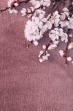 Flowering branch of apricot on fabric stock image