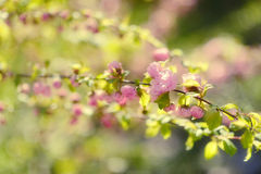Flowering branch Royalty Free Stock Photography