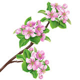 Flowering branch Royalty Free Stock Images