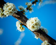 Flowering branch stock image