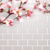 Flowering branch and a brick wall. Royalty Free Stock Photography