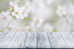 Flowering branch of cherry over old light wooden table or board. royalty free stock photography