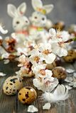 Flowering branch, feather, and quail eggs. Royalty Free Stock Photo