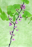 Flowering branch, green background Royalty Free Stock Image