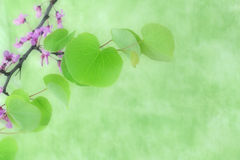 Flowering branch, green background, space for text Stock Images