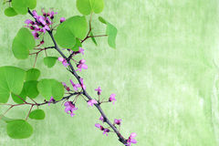 Flowering branch, green background, space for text Royalty Free Stock Photos