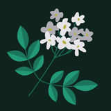 Flowering branch isolated Royalty Free Stock Images