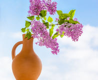 Flowering branch of lilac in a clay jar Stock Photos