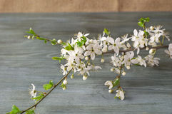 Flowering branch on paper texture. Japanese style of wabi sabi. Royalty Free Stock Images