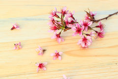 Flowering branch with pink delicate flowers Stock Photo