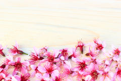 Flowering branch with pink delicate flowers Royalty Free Stock Photography