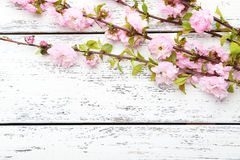Flowering branch. Spring flowering branch on white wooden background Royalty Free Stock Images