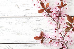 Flowering branch. Spring flowering branch on white wooden background Royalty Free Stock Photo