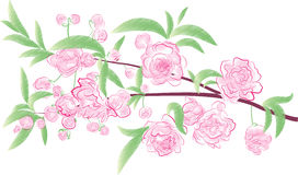 Flowering branch. Watercolor flowers in white Stock Photography