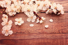 Flowering branch with white delicate flowers on Royalty Free Stock Photo