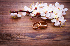 Flowering branch with white delicate flowers on wooden surface. Royalty Free Stock Photo