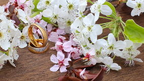 Flowering branch with white delicate  surface. Declaration of love, spring.  greeting. Wedding bouquet, stock video