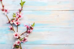 Flowering branches of Almond on a wooden table royalty free stock image