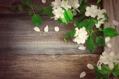 Flowering branches of apple trees on rough wooden background, ti Stock Photography