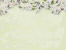 Flowering branches tree and stucco wall background Royalty Free Stock Photo