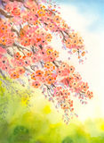 Flowering branches. Watercolour background Stock Images