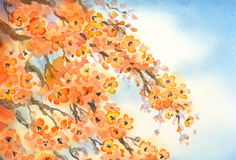 Flowering branches. Watercolour background Stock Photo
