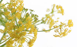 Flowering branches on white, blurred Stock Photos