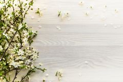 Flowering branches on white wooden background. royalty free stock images