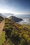 South west coast path, leading to Screda Point, Devon. Flowering bright yellow gorse, Ulex europaeus stands at the side as the south west coast path leads down royalty free stock photography