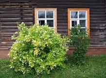 Flowering bush Royalty Free Stock Image