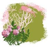 Flowering bush Stock Image