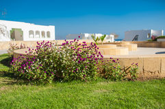 Flowering bush on the hotel in Egypt Stock Photos