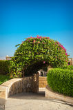 Flowering bush on the hotel in Egypt Stock Photo