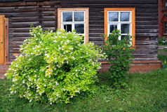 Flowering bush near wall of the wooden building Royalty Free Stock Photos