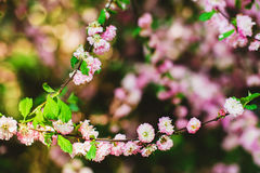 Flowering bush Royalty Free Stock Photography