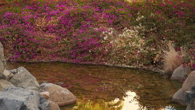 Flowering bush reflected in a small river stock video footage