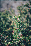 Flowering bush in sunny garden Stock Images
