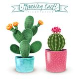 Flowering Cacti Realistic Set. Blooming cacti realistic set of 2 popular houseplants varieties in colorful decorative pots closeup image vector illustration stock illustration