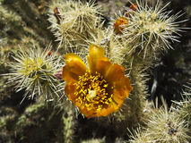 Flowering cactus Stock Photo