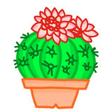 Flowering cactus. On white background Royalty Free Stock Images