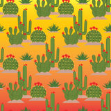 Flowering cactuses. Seamless pattern. Royalty Free Stock Image