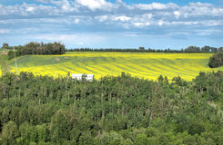 Flowering canola field framed with forest Royalty Free Stock Photos