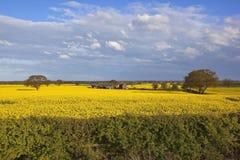 Flowering canola fields in springtime Stock Photo
