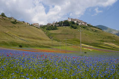 The flowering of Castelluccio di Norcia Royalty Free Stock Photos