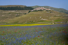 The flowering of Castelluccio di Norcia. Is a spring event that attracts many photographers and tourists. In the plain of Castelluccio, Umbria, lentils are Stock Images
