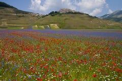 The flowering of Castelluccio di Norcia Stock Photos