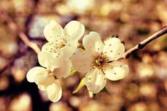 Flowering Stock Image