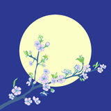 Flowering cherry branch on background of moon Royalty Free Stock Photos