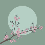 Flowering cherry branch on background of moon. Vintage Royalty Free Stock Images