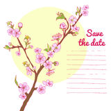 Flowering cherry branch on background of sun Royalty Free Stock Photos